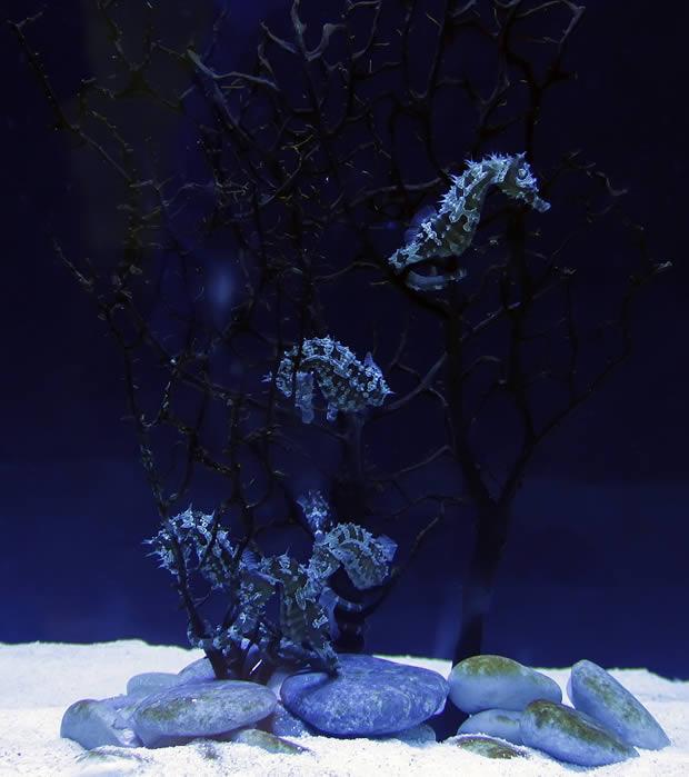 aqua-vega-7