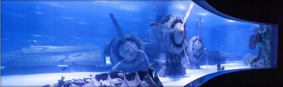 Okyanus Akvaryum 2