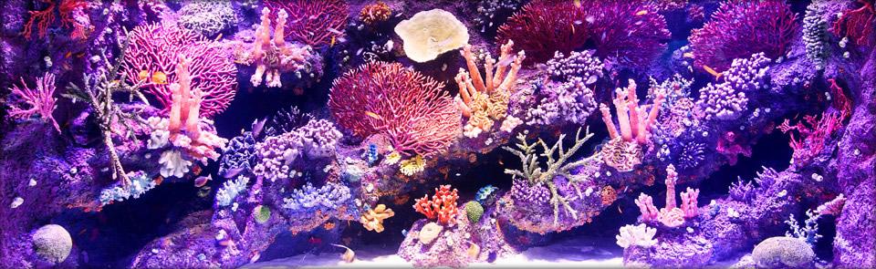 Okyanus Akvaryum 11
