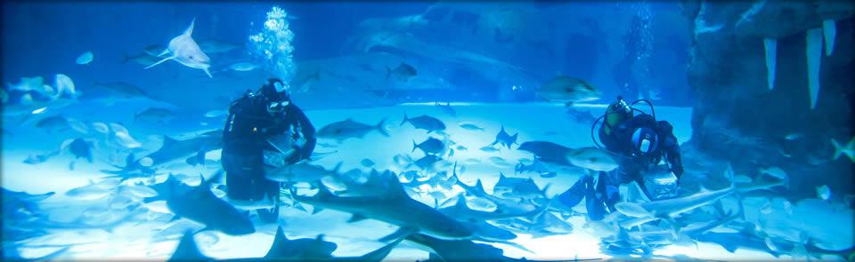 Okyanus Akvaryum 5