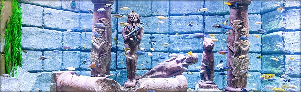 Okyanus Akvaryum 7