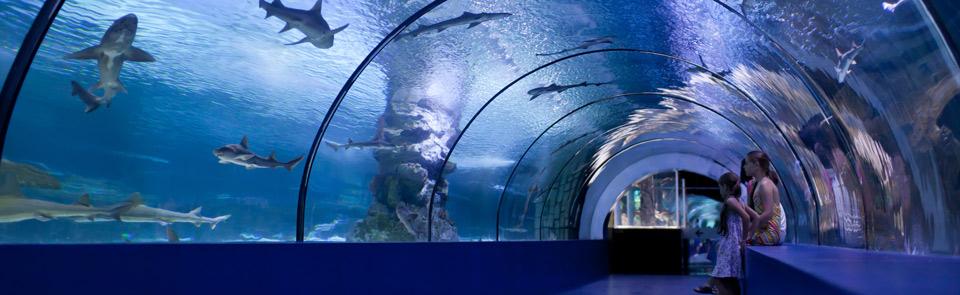 Okyanus Akvaryum