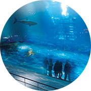 Abu Dhabi Aquarium