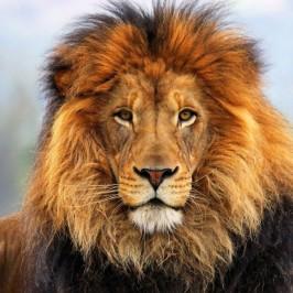 Tarsus Hayvanat Bahçesi