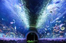 New York Via Aquarium